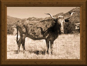 sepia-tone portrait of traditional Texas Longhorn cow Lely Ranch 4