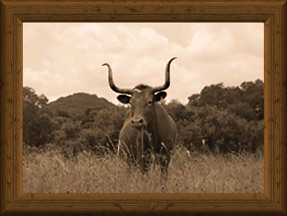 sepia-tone portrait of traditional Texas Longhorn cow Kimball's 125