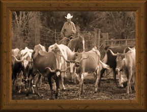 sepia-tone photo of cowboy herding traditional Texas Longhorn cows Lawrence Wallace