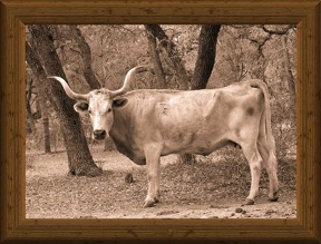 sepia-tone photo of traditional Texas Longhorn cow Spear E 527