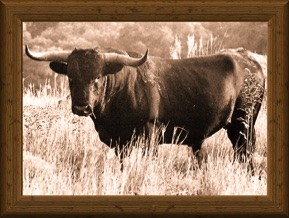 sepia-tone portrait of a traditional Texas Longhorn bull WR 2308