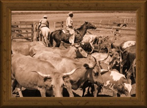 sepia-tone photo of Mexican cowboys on horseback cutting traditional Texas Longhorn cows in pens 1950's