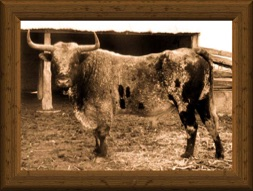 Sepia-tone portrait of a traditional old-time Texas Longhorn bull Yates 8