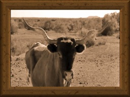 Sepia-tone headshot of a triple-twisted old-timey longhorn cow Miss Twisty, Jr.